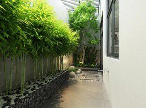 mẫu sân vườn trồng cây theo hàng