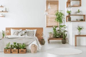 cây cảnh trang trí phòng ngủ nhỏ không giường